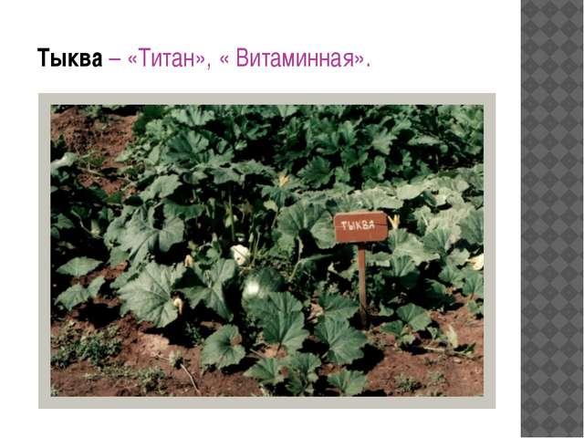Тыква – «Титан», « Витаминная».