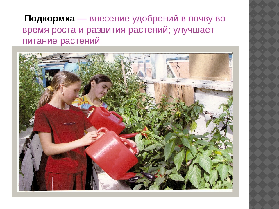 Подкормка — внесение удобрений в почву во время роста и развития растений; у...