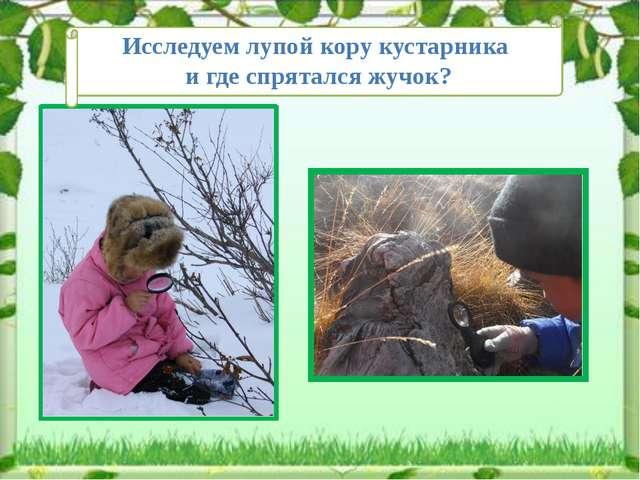 Исследуем лупой кору кустарника и где спрятался жучок?