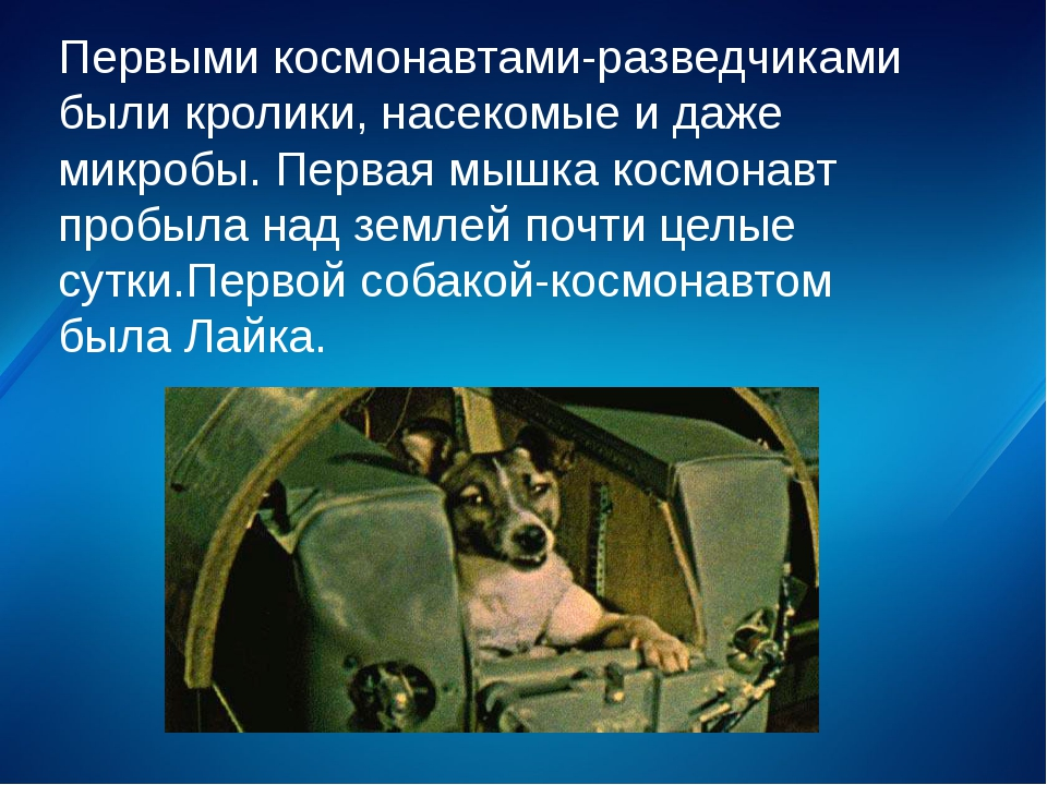 Первыми космонавтами-разведчиками были кролики, насекомые и даже микробы. Пер...
