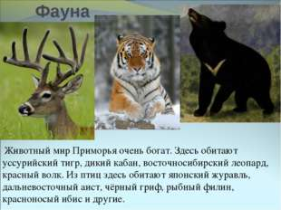 Фауна Животный мир Приморья очень богат. Здесь обитают уссурийский тигр, дики