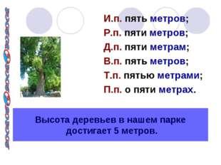Высота деревьев в нашем парке достигает 5 метров. И.п. пять метров; Р.п. пяти