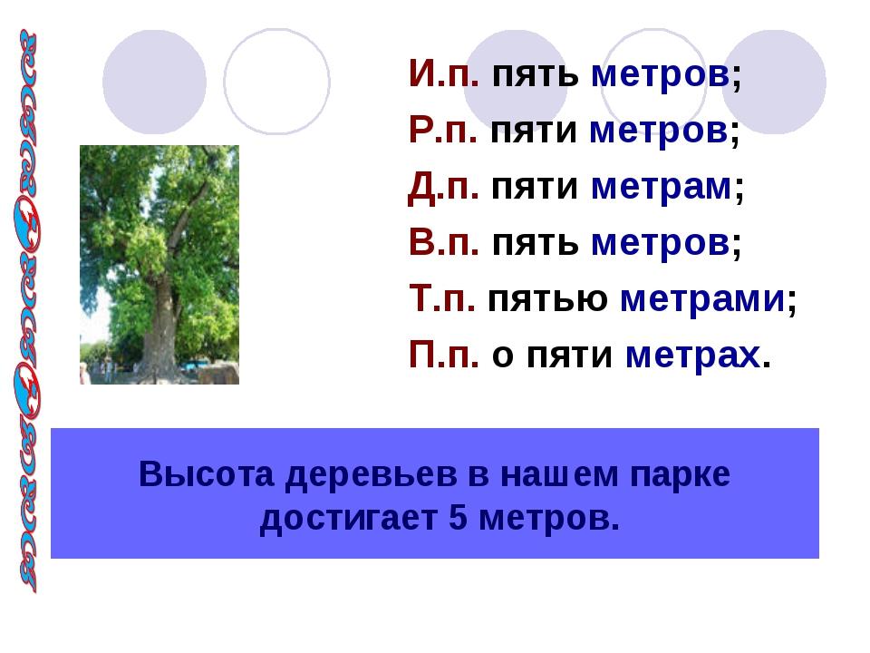 Высота деревьев в нашем парке достигает 5 метров. И.п. пять метров; Р.п. пяти...