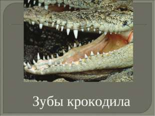 Зубы крокодила