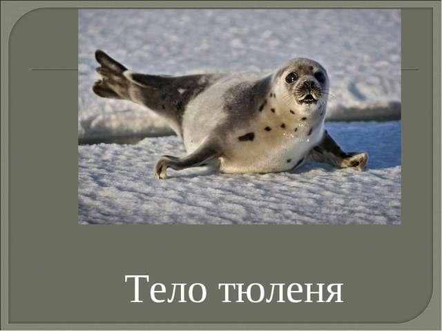 Тело тюленя