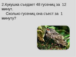 2.Кукушка съедает 48 гусениц за 12 минут. Сколько гусениц она съест за 1 мин