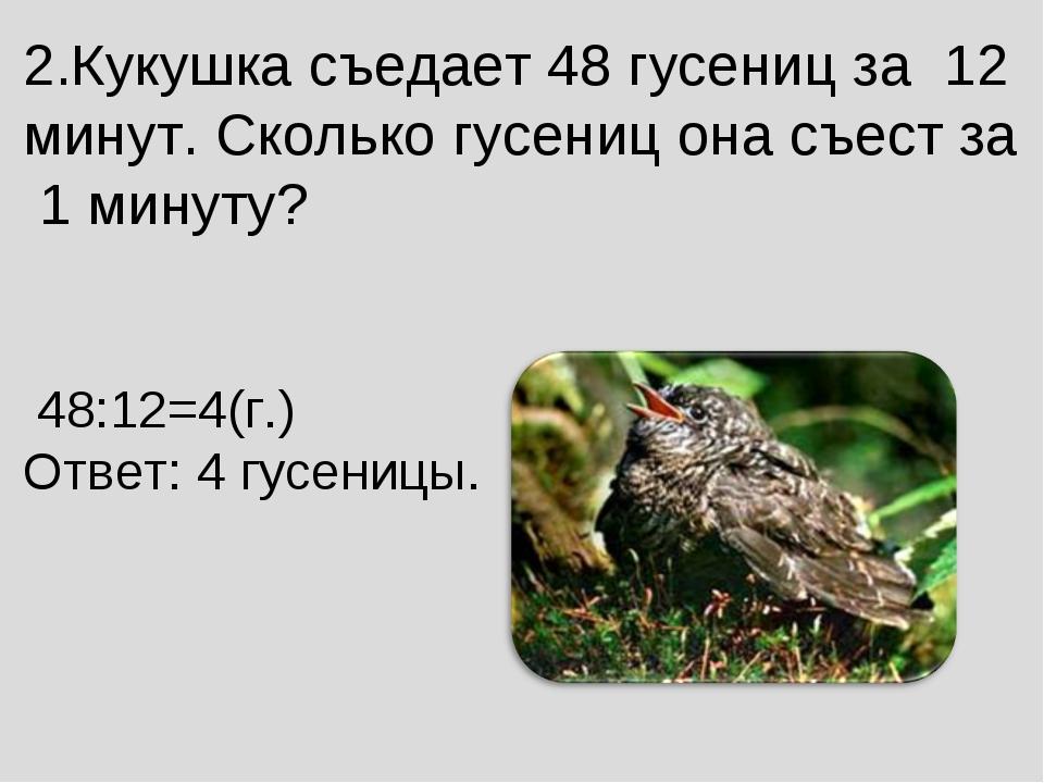 2.Кукушка съедает 48 гусениц за 12 минут. Сколько гусениц она съест за 1 мин...