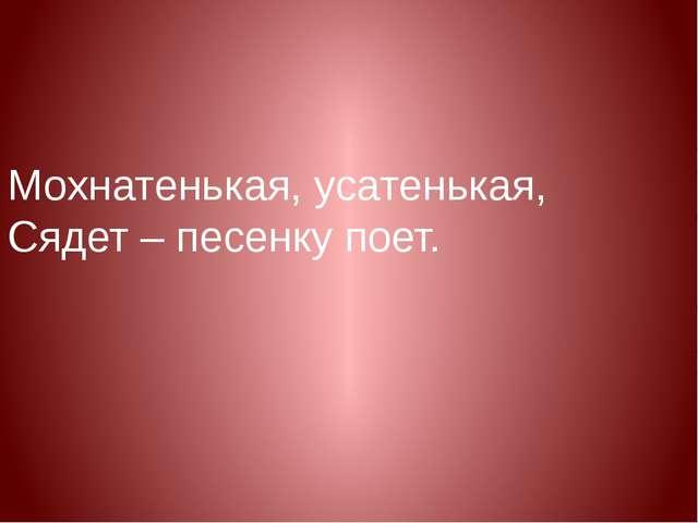 Мохнатенькая, усатенькая, Сядет – песенку поет.