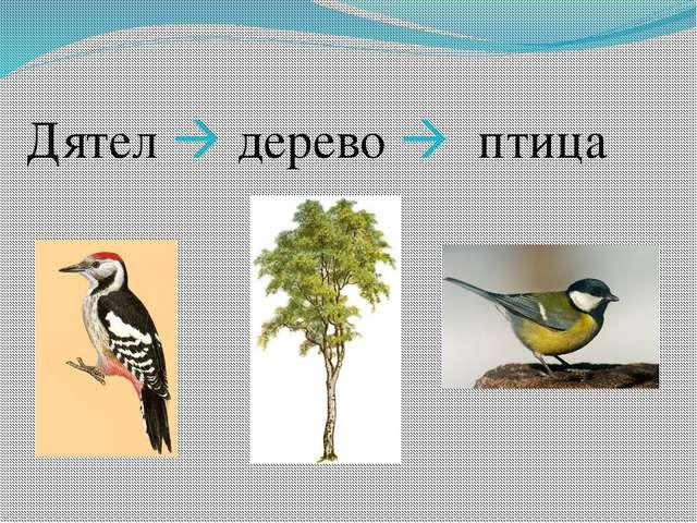 Дятел  дерево  птица