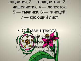 Диаграмма цветка. 1— ось соцветия, 2— прицветник, 3— чашелистик, 4— лепе