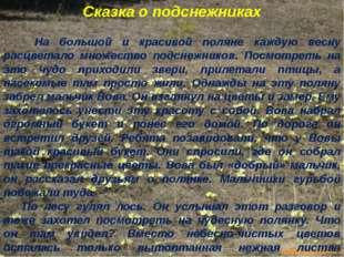 Сказка о подснежниках На большой и красивой поляне каждую весну расцветало мн