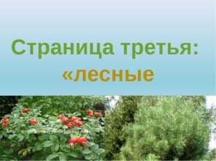 Страница третья: «лесные целители»