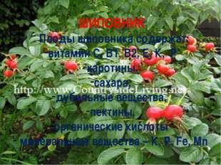 ШИПОВНИК Плоды шиповника содержат: витамин С, В1, В2, Е, К, Р каротины, саха