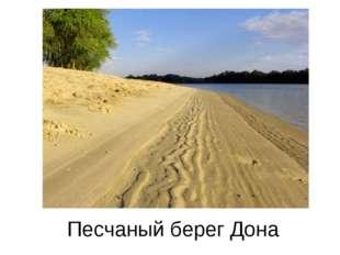 Песчаный берег Дона
