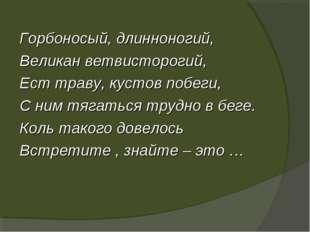 Горбоносый, длинноногий, Великан ветвисторогий, Ест траву, кустов побеги, С