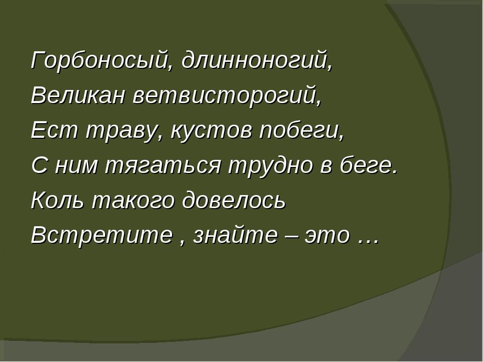 Горбоносый, длинноногий, Великан ветвисторогий, Ест траву, кустов побеги, С...