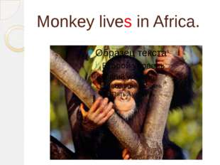 Monkey lives in Africa.
