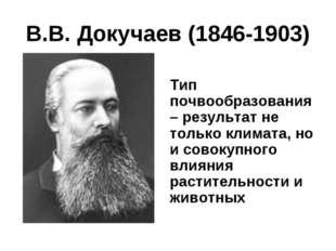 В.В. Докучаев (1846-1903) Тип почвообразования – результат не только климата