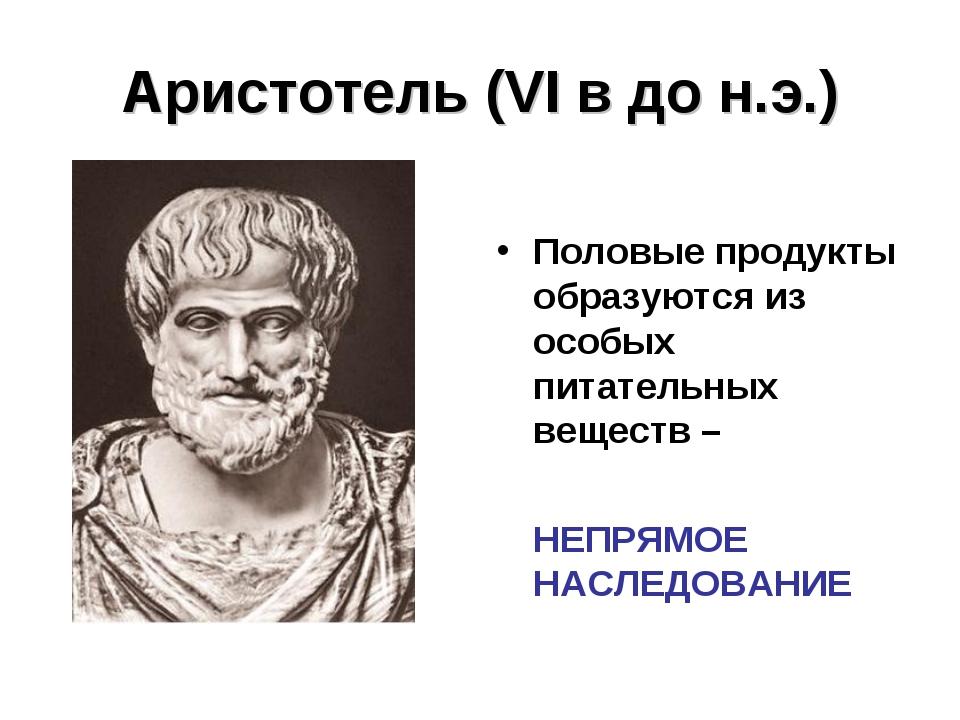Аристотель (VI в до н.э.) Половые продукты образуются из особых питательных в...