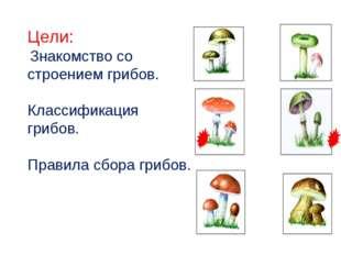 Цели: Знакомство со строением грибов. Классификация грибов. Правила сбора гри