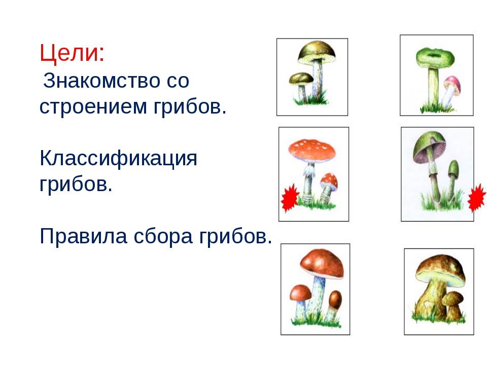 Цели: Знакомство со строением грибов. Классификация грибов. Правила сбора гри...