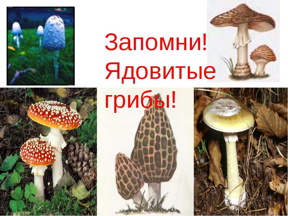 Запомни! Ядовитые грибы!