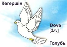 D:\ДОКУМЕНТЫ\для Еремеевой Е.Н\English\птицы\25 (6).jpg