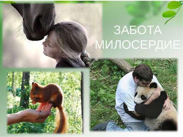 ЗАБОТА МИЛОСЕРДИЕ Белка - http://nature.baikal.ru/phs/norm/43/43428.jpg Панда...