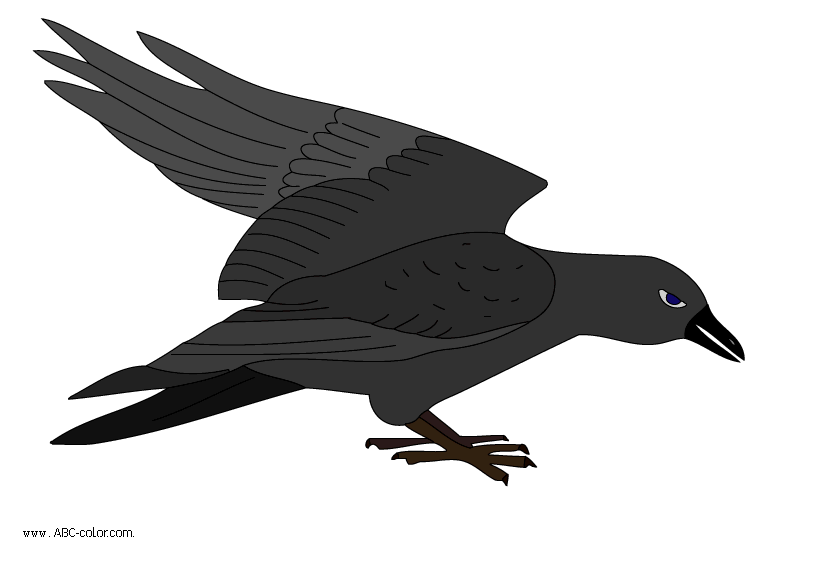 raven-picture-color.png