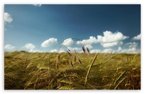 C:\Users\Я\Desktop\summer_wind_2-t2.jpg