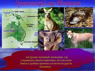 Австралия огромный заповедник, где сохранились многие животные, что населяли