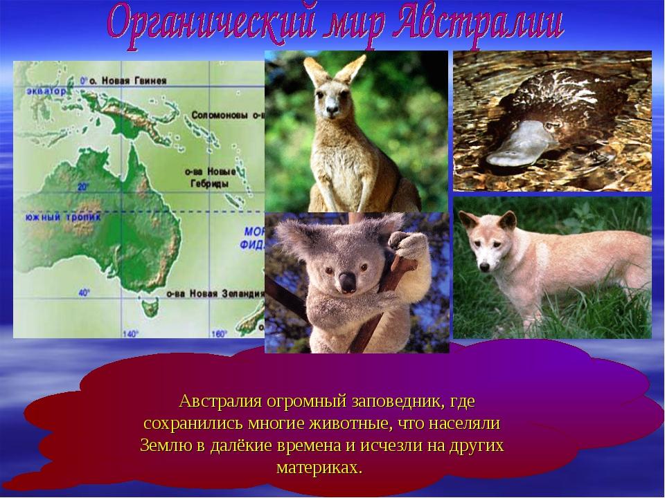 Австралия огромный заповедник, где сохранились многие животные, что населяли...