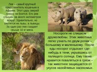 Носороги не слишком дружелюбны. Этих животных легко узнать по двум рогам – бо