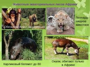Животные экваториальных лесов Африки Обезьяны живут на деревьях Леопард– хищн