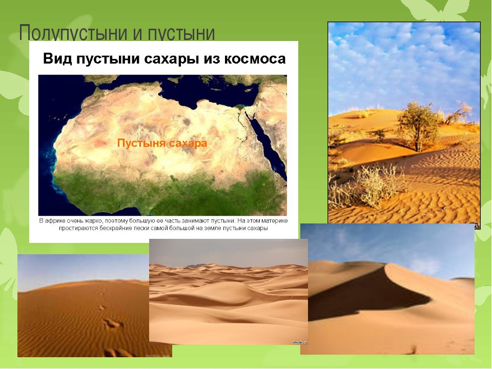 Полупустыни и пустыни