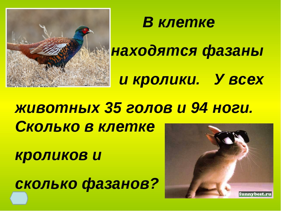 В клетке находятся фазаны и кролики. У всех животных 35 голов и 94 ноги. Ско...