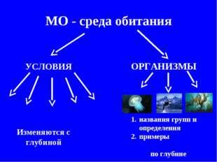 МО - среда обитания УСЛОВИЯ ОРГАНИЗМЫ Изменяются с глубиной названия групп и