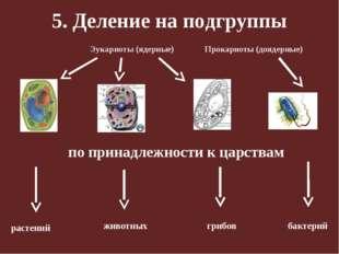 5. Деление на подгруппы по принадлежности к царствам растений животных грибов