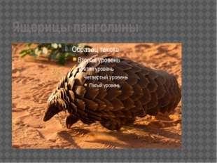 Ящерицы панголины