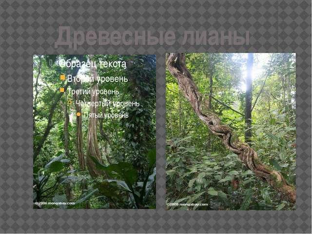 Древесные лианы