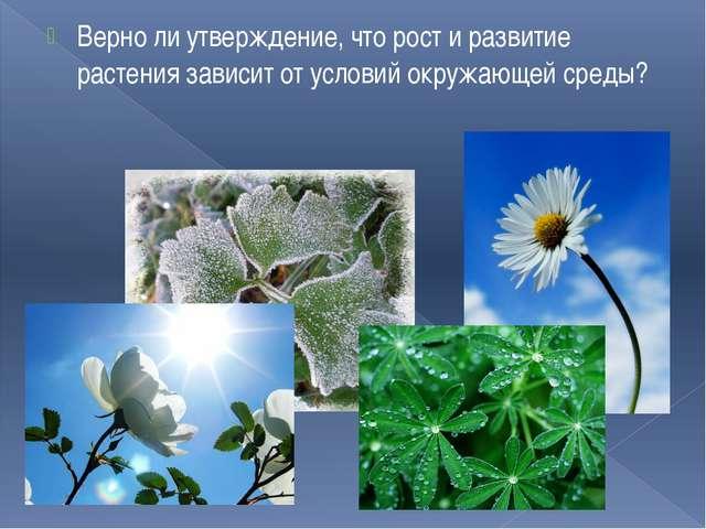 Верно ли утверждение, что рост и развитие растения зависит от условий окружаю...