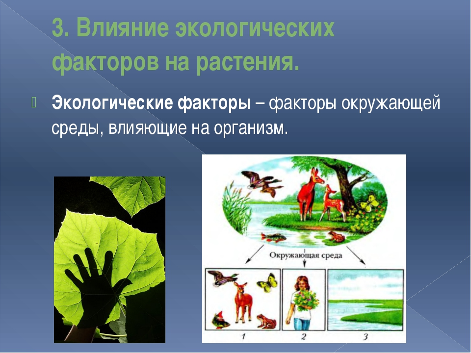3. Влияние экологических факторов на растения. Экологические факторы – фактор...
