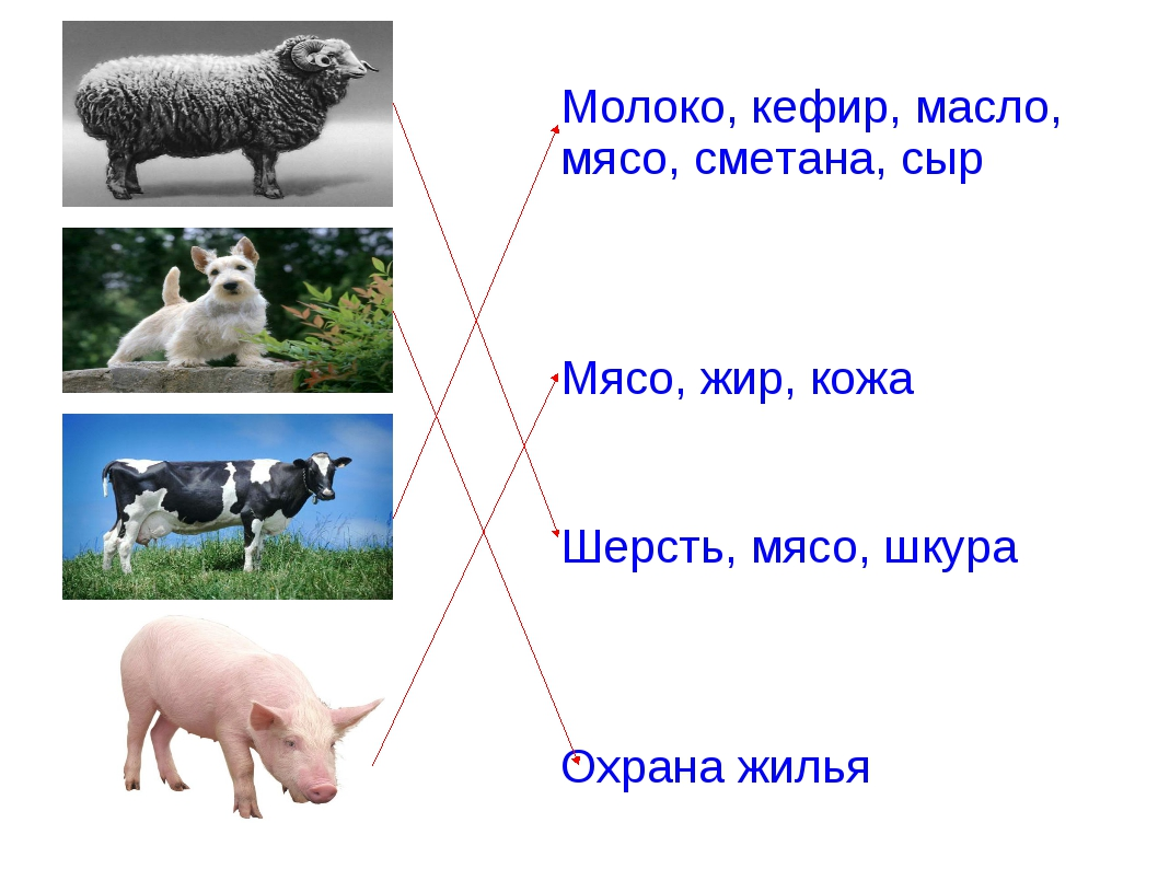 Молоко, кефир, масло, мясо, сметана, сыр Мясо, жир, кожа Шерсть, мясо, шкура...