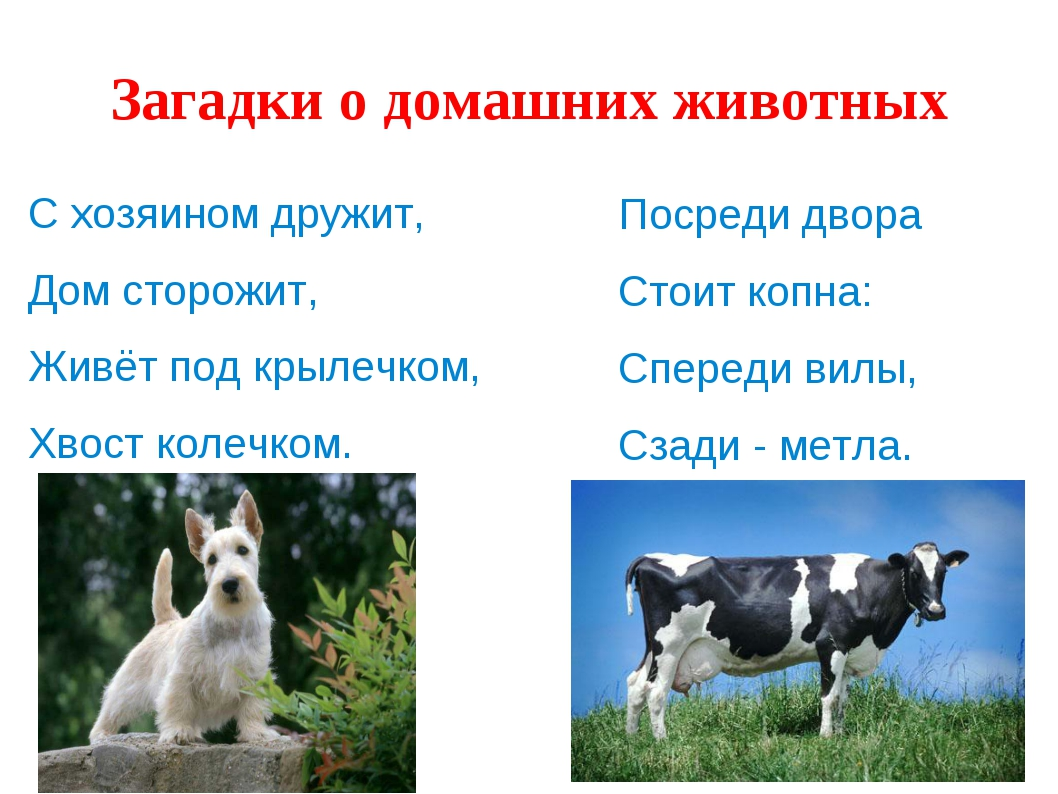 Загадки о домашних животных С хозяином дружит, Дом сторожит, Живёт под крылеч...