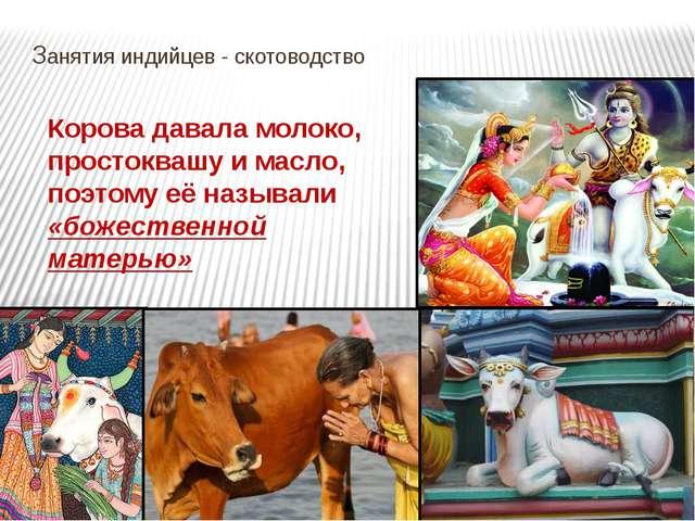 Занятия индийцев - скотоводство Корова давала молоко, простоквашу и масло, п...