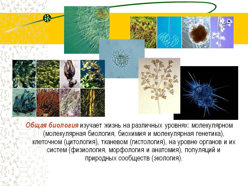 http://900igr.net/datas/biologija/Istorija-biologii/0020-020-Obschaja-biologija-izuchaet-zhizn-na-razlichnykh-urovnjakh-molekuljarnom.jpg