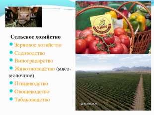 Сельское хозяйство Зерновое хозяйство Садоводство Виноградарство Животноводс