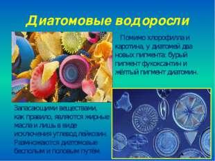 Диатомовые водоросли Помимо хлорофилла и каротина, у диатомей два новых пигме
