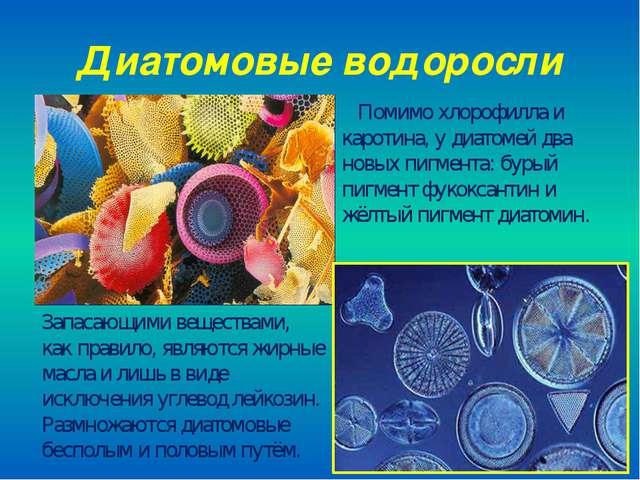Диатомовые водоросли Помимо хлорофилла и каротина, у диатомей два новых пигме...