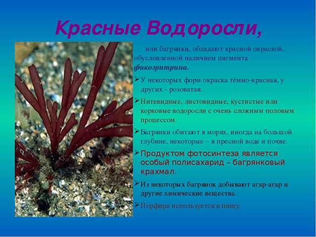 Красные Водоросли, или багрянки, обладают красной окраской, обусловленной нал...